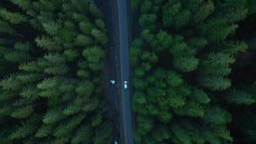 Vista aérea del coche que monta en el camino en el bosque conífero entre las montañas almacen de metraje de vídeo