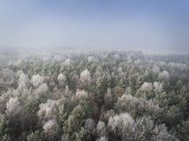 Vista aérea del fondo del invierno con un bosque nevado Imagenes de archivo