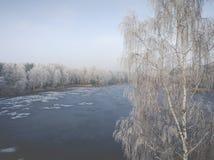Vista aérea del fondo del invierno con un bosque nevado Imagen de archivo libre de regalías