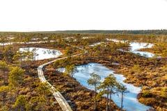 Vista aérea del gran paisaje del humedal del pantano de Kemeri: sendero de madera en el pantano con la flora coloreada otoño en e imagen de archivo