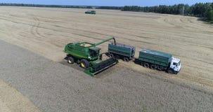 Vista aérea del grano del cargamento de la cosechadora del trigo en el hindcarriage del ` s del camión almacen de metraje de vídeo