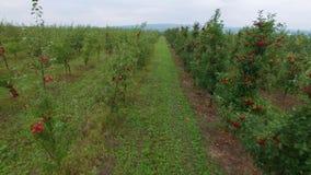 Vista aérea del manzanar almacen de metraje de vídeo