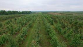 Vista aérea del manzanar almacen de video