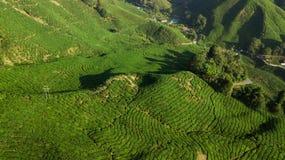Vista aérea del paisaje verde hermoso de la plantación de té en Cameron Highlands fotos de archivo libres de regalías