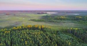 Vista aérea del pantano en la reserva natural Krasny Bor, Bielorrusia almacen de metraje de vídeo