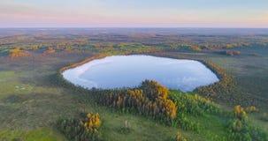 Vista aérea del pantano en la reserva natural Krasny Bor, Bielorrusia almacen de video