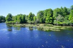 Vista aérea del parque del lago lettuce, Imagen de archivo libre de regalías