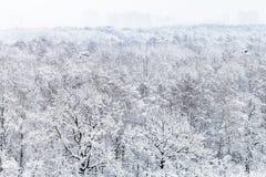 vista aérea del parque urbano nevado en invierno Fotografía de archivo libre de regalías