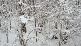 Vista a?rea del pasado m?vil por los ?rboles nevosos en el bosque en invierno metrajes