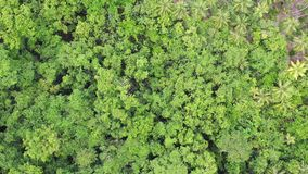 Vista aérea del toldo de la selva tropical en Papúa Nueva Guinea metrajes