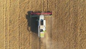 Vista aérea del trigo moderno de la cosecha mecanizada en el campo El volar directamente sobre cosechadora almacen de video