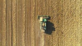Vista aérea del trigo moderno de la cosecha mecanizada en el campo El volar directamente sobre cosechadora metrajes