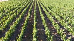 Vista aérea del viñedo almacen de metraje de vídeo