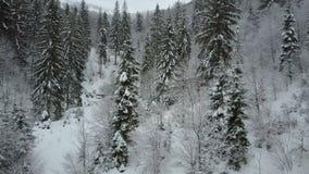 Vista aérea del vuelo bajo del bosque nevoso de la picea del invierno sobre un río y los árboles de pino cubiertos por la nieve B almacen de video