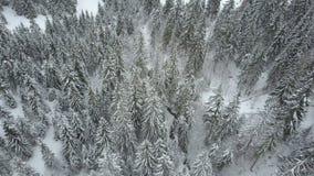 Vista aérea del vuelo bajo del bosque nevoso de la picea del invierno sobre un río y los árboles de pino cubiertos por la nieve B almacen de metraje de vídeo