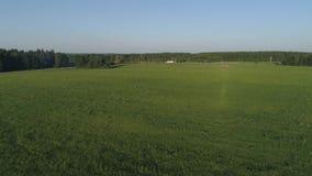 Vista aérea do campo e da floresta verdes do pinho filme