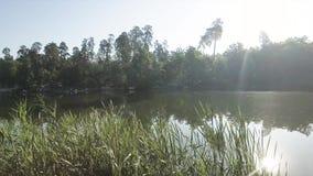 Vista aérea do lago bonito grande e das árvores verdes fora Conexão com a natureza selvagem, acampando Tiro do zang?o video estoque
