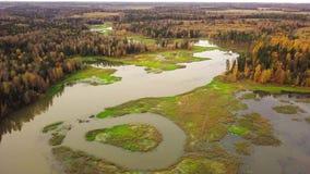 Vista aérea do leito fluvial pantanoso do enrolamento do rio da floresta Floresta colorida bonita do outono filme