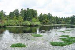 Vista aérea do parque do lago lettuce, foto de stock