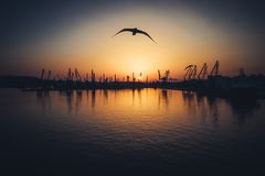 Vista aérea do porto marítimo de Varna e de guindastes industriais, Bulgária Fotografia de Stock Royalty Free
