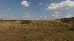 Vista aérea do prado video estoque
