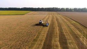 Vista aérea do trigo de enchimento do caminhão da liga video estoque