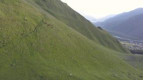 Vista aérea do zangão aos cavalos em montanhas com ravina e fratura perto da montanha Kazbegi em Geórgia video estoque
