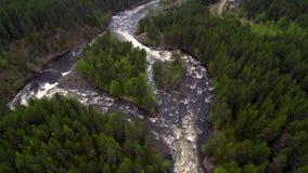 Vista aérea do zangão O rio da montanha flui entre a floresta densa do taiga vídeos de arquivo