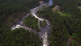 Vista aérea do zangão O rio da montanha flui entre a floresta densa do taiga filme