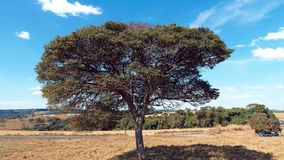 Vista aérea do zangão que gerencie ao redor a árvore Grande vista de gerencio filme