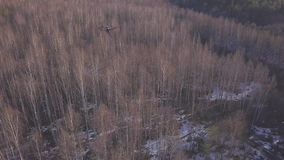Vista aérea do zangão que voa acima das árvores e e que dispara no vídeo da paisagem da floresta do inverno ou da mola no dia ens video estoque