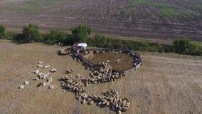 Vista aérea do zangão sobre um sheepfold video estoque