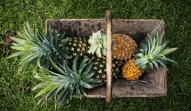 Vista aérea dos abacaxis na cesta de madeira Fotos de Stock Royalty Free