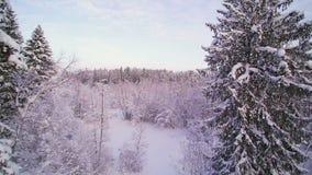 A vista aérea dos pinheiros na floresta filme