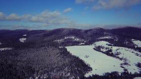 Vista aérea dos pinheiros nas montanhas video estoque