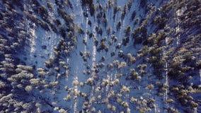 Vista aérea dos pinheiros nas montanhas filme