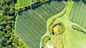 Vista aérea em fileiras da videira Ilha de Waiheke, Auckland, Nova Zelândia foto de stock