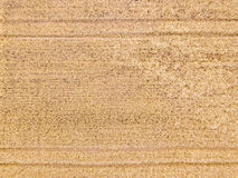 Vista aérea em um campo de trigo Foto de Stock Royalty Free