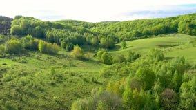 Vista aérea 4k de las colinas y del bosque verdes del campo de un abejón almacen de metraje de vídeo