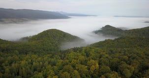 Vista aérea a la mañana soleada de niebla en bosque cárpato almacen de metraje de vídeo