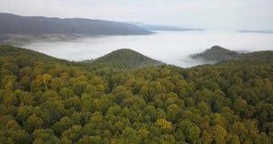 Vista aérea a la mañana soleada de niebla en bosque cárpato metrajes