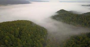 Vista aérea a la mañana soleada de niebla en bosque cárpato almacen de video