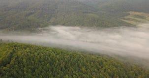 Vista aérea a la mañana soleada de niebla en el bosque cárpato, tiro en Ucrania metrajes