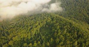 Vista aérea a la mañana soleada de niebla en el bosque cárpato, tiro en Ucrania almacen de video