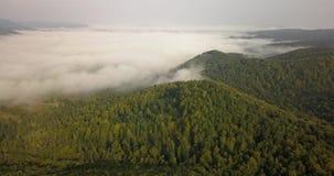 Vista aérea a la mañana soleada de niebla en el bosque cárpato, tiro en Ucrania almacen de metraje de vídeo