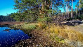 Vista aérea na floresta e no pântano em Celestynow mim Polônia Imagens de Stock