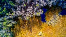 Vista aérea na floresta e no pântano em Celestynow mim Polônia imagem de stock