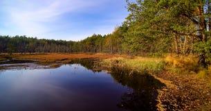 Vista aérea na floresta e no pântano em Celestynow no Polônia foto de stock