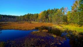 Vista aérea na floresta e no pântano em Celestynow no Polônia Imagens de Stock