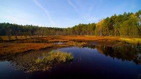 Vista aérea na floresta e no pântano em Celestynow no Polônia imagem de stock